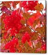Fall 08-008 Canvas Print