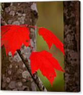 Fall Aflame Canvas Print