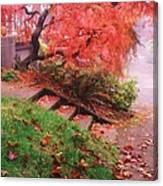 Fall And Fog Canvas Print