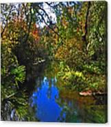Fall At Kelly Park Canvas Print
