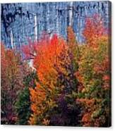 Fall At Steele Creek Canvas Print