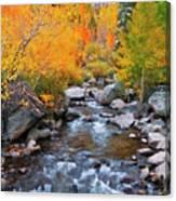 Fall Color Along Bishop Creek, Inyo Canvas Print