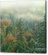 Fall Color And Fog Near Garberville California Canvas Print