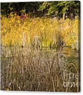 Fall Color At Banff Spring Basin Canvas Print
