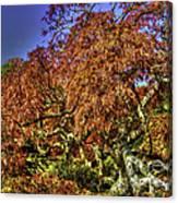 Fall Color At Biltmore Canvas Print