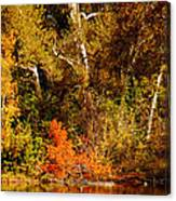 Fall Color Creekside Canvas Print
