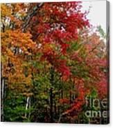 Fall Color Palette Canvas Print