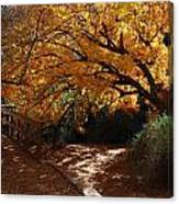 Fall Color Path Canvas Print