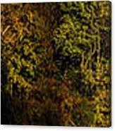 Fall Color Trees V7 Pano Canvas Print