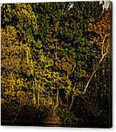 Fall Color Trees V8 Pano Canvas Print