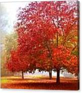 Fall Colored Trees Canvas Print