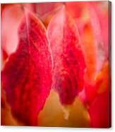 Fall Colors 0666 Canvas Print