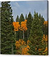 Fall Colors 2 Greeting Card Canvas Print