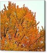 Fall Colors 2014-11 Canvas Print