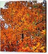 Fall Colors 2014 - 14 Canvas Print