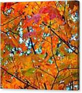 Fall Colors 2014-5 Canvas Print
