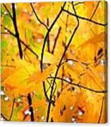 Fall Colors 2014-7 Canvas Print