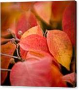 Fall Colors 6675 Canvas Print