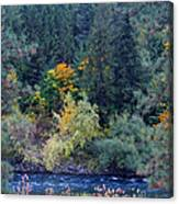 Fall Colors By The Spokane River Canvas Print