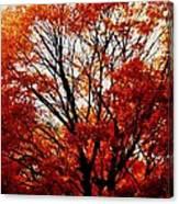 Fall Colors Cape May Nj Canvas Print