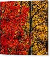 Fall Colors Dp Canvas Print