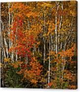 Fall Colors Greeting Card Canvas Print