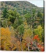 Fall Colors II Canvas Print