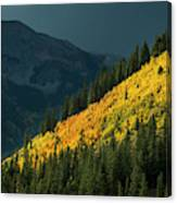 Fall Colors In Aspen Colorado Canvas Print
