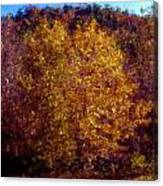Fall Colors In Yellow Canvas Print