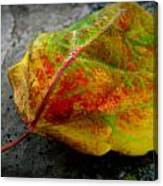 Fall Colors On A Downed Aspen Leaf Canvas Print