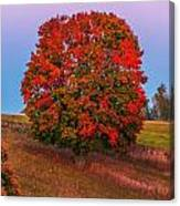 Fall Colors Over A Big Tree In Warmia In Poland During Twilight Hour Canvas Print