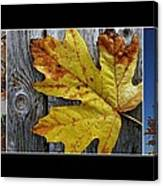 Fall Colors Triptych Canvas Print