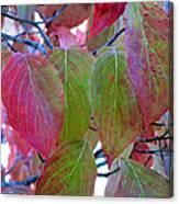 Fall Dogwood Leaf Colors 1 Canvas Print