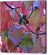Fall Dogwood Leaf Colors 2 Canvas Print
