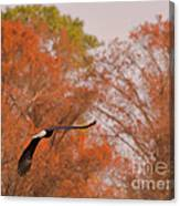 Fall Eagle Canvas Print