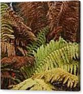 Fall Ferns Acadia National Park Img 6355 Canvas Print