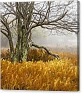 Fall Ferns And Fog Canvas Print