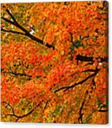 Fall Fiesta Canvas Print