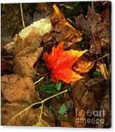 Fall Flames Out Canvas Print