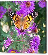 Fall Flutterby Canvas Print