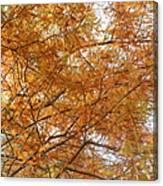 Fall Foilage Canvas Print