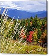 Fall Foliage 2 Canvas Print