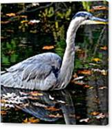 Fall Foliage And Fowl Canvas Print