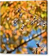 Fall Foliage Canvas Print