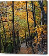 Fall Foliage Colors 03 Canvas Print