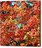Fall Foliage Colors 22 Canvas Print