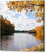 Fall Foliage V Canvas Print