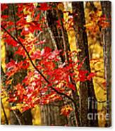 Fall Forest Detail Canvas Print
