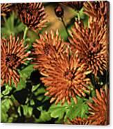 Fall Garden Flowers Canvas Print