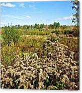 Fall Goldenrod Field Canvas Print